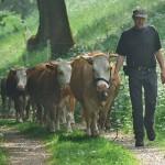 Herde und Rainer Woelfel